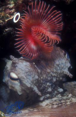 Formiche della Zanca Subacquea Isola d' Elba immersioni sub
