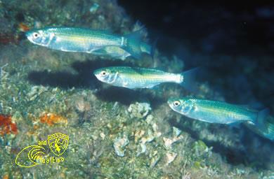 Sassi Neri Subacquea Isola d'  Elba immersioni sub