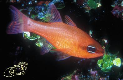 Scogli dei Gemini Subacquea Isola d'  Elba immersioni sub